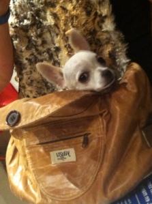 mochilas para perritos